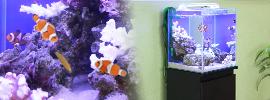 海水魚水槽30cm