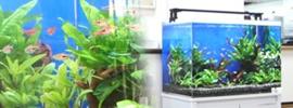 淡水魚水槽60cm