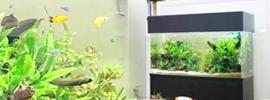 淡水魚水槽90cm