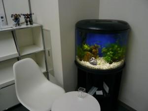 オフィスに優しい雰囲気の水槽を