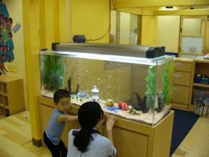 幼稚園に大型水槽!