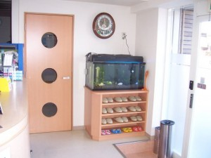 ユニークな水槽!