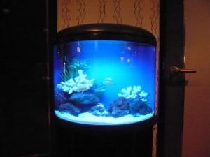 色鮮やかなお魚が泳ぐコンパクト水槽