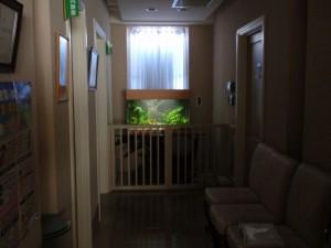 婦人科医院に水草溢れる緑豊かな水槽を