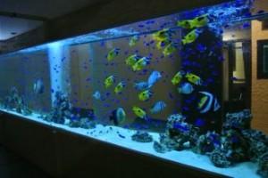 大迫力!美しい海水魚達