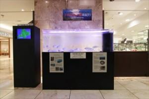 期間限定イベント ヒメマス展示水槽を設置しました
