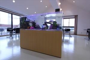京都市 企業に150cm海水魚水槽