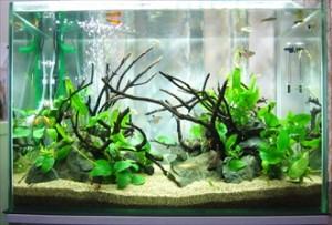 個人宅様 きれいな淡水魚が癒しを運びます