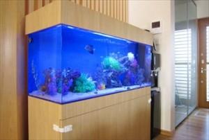 インテリアと調和させた海水魚水槽です