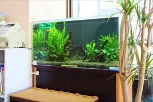 緑鮮やかな水草が患者様を癒します!