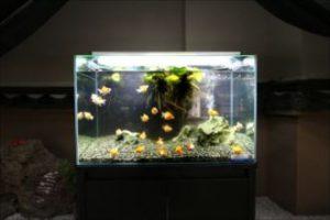 涼を呼ぶ金魚水槽!