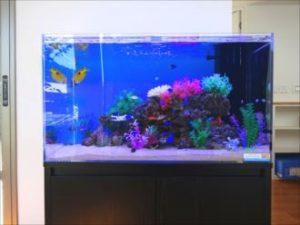 複雑な岩山を魚たちが泳ぐ水槽!