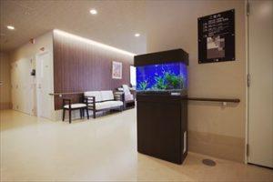 京都市西京区 オフィスに癒しの水草水槽を