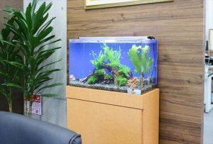 京都市 オフィスの60cm淡水水槽をリニューアル!