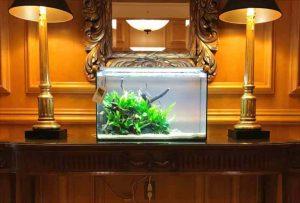 滋賀県米原市 ホテルに60cm淡水魚水槽