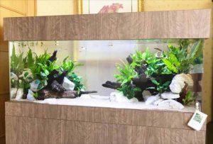 滋賀県米原市 ホテルに120cm淡水魚水槽