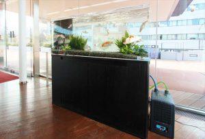 泳ぐ宝石と呼ばれる錦鯉の水槽を大学に設置