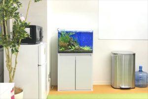 大阪府 オフィスを60cm淡水魚水槽で華やかに