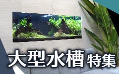 京都アクアガーデンの大型水槽特集